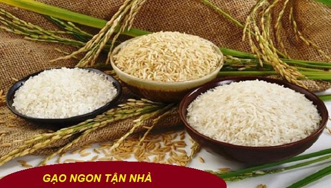 Gạo Nếp Thái - Giá gạo nếp hôm nay