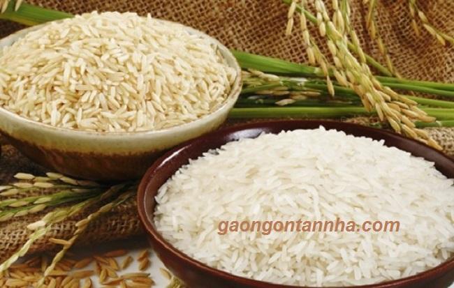 Các loại gạo đặc sản của việt nam 1