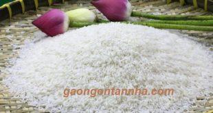 Các loại gạo đặc sản của việt nam 4