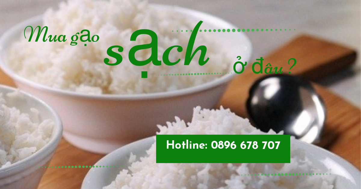 Làm thế nào để phân biệt gạo thật gạo giả trên thị trường hiện nay