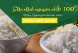 Làm thế nào để phân biệt gạo thật gạo giả trên thị trường ?