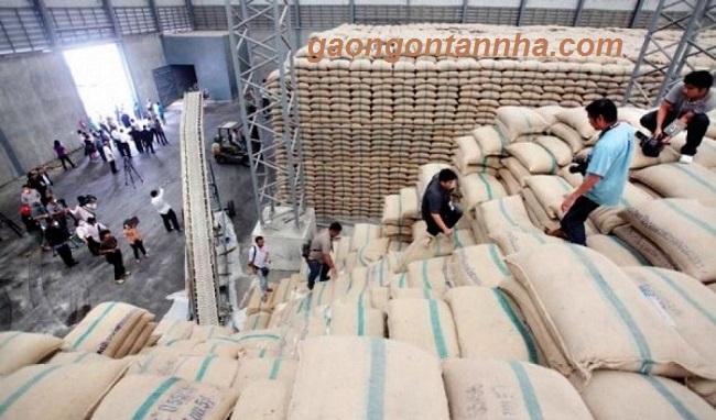 Chuyên cung cấp gạo nếp ngỗng nếp thái cho các đại lý VAT 0% tại tphcm