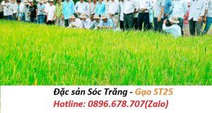 Những điều cần lưu ý khi mua gạo ST25